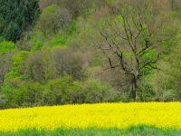 Geel-groen_AVT-