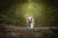 Dog_in_the_woods_-_Sofie_Van_Hoovels