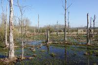 Verdronken_land_-_Marleen_Wellens