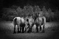 01_Paardenkracht_-_Renilde_Vos